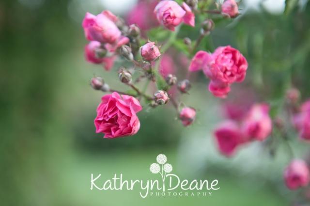 kathryndeane-23