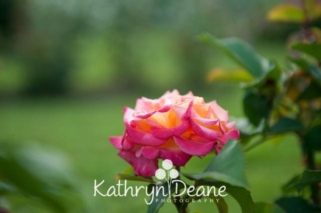 kathryndeane-24